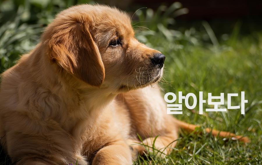 【初級】韓国語「알아보다(アラボダ)」を覚える