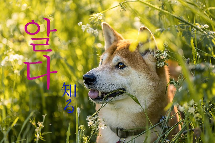 【初級】韓国語「알다(アルダ)」を覚える