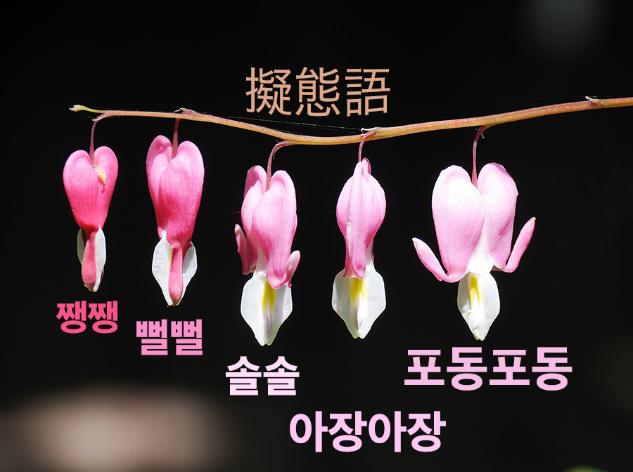 【中級】韓国でよく使われる「擬態語」を覚える ②