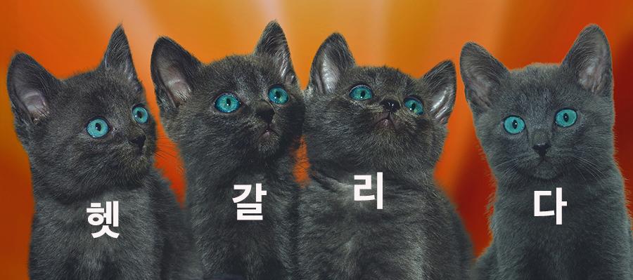 【初級】韓国語「헷갈리다(ヘッカルリダ)」を覚える