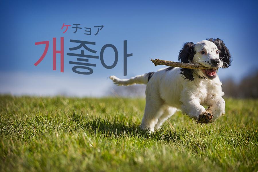 【新造語】韓国語「개(ケ) - 」はどんな意味?