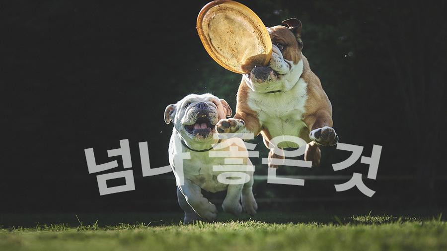 【新造語】若者がよく使う韓国語「넘나 -것」を覚える