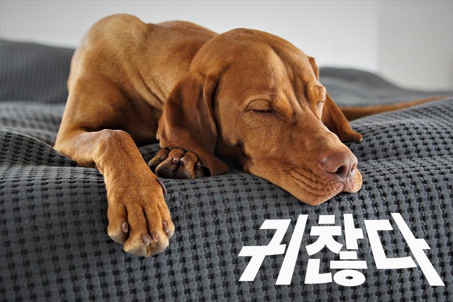 【中級】韓国語「귀찮다(クィチャンタ)」を覚える