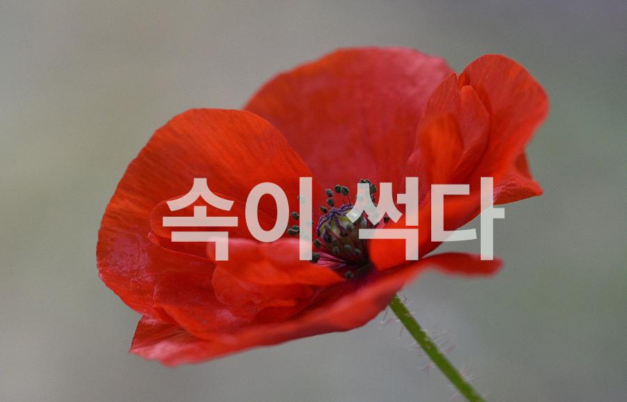 【中級】韓国語「속이 썩다:心を傷める」を覚える