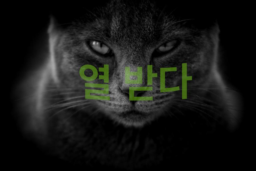 【中級】韓国語「열(을) 받다:頭に来る」を覚える